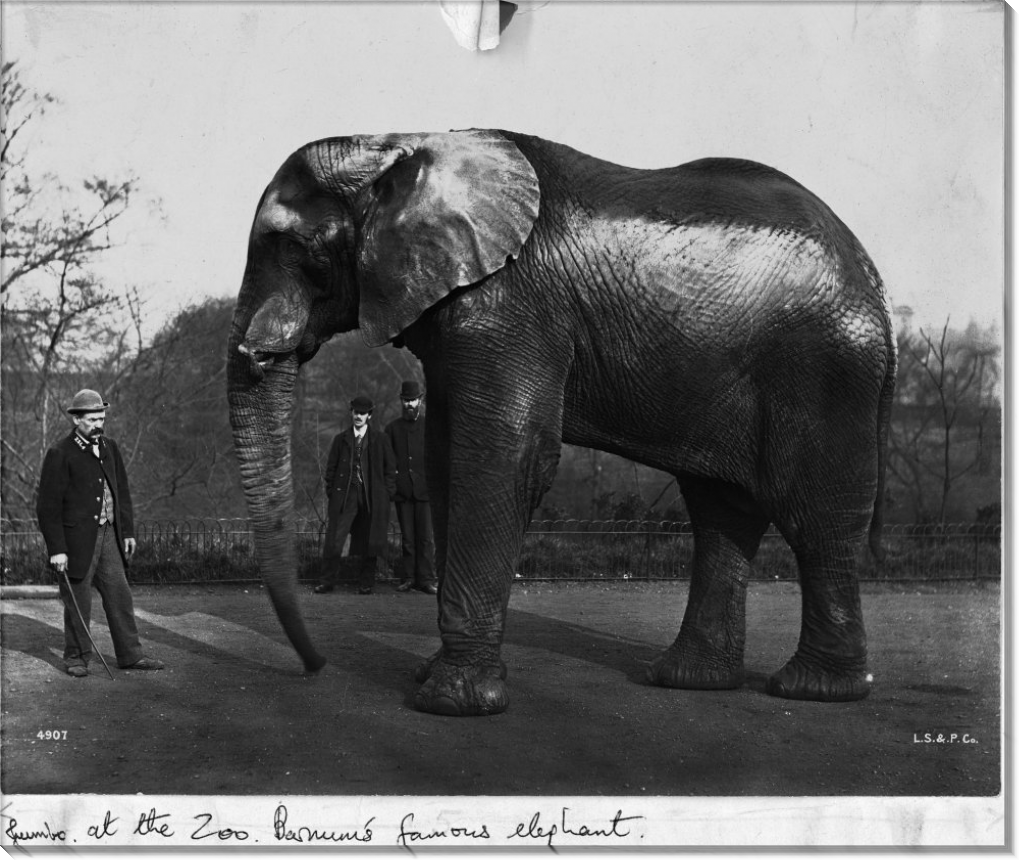 Цирковой слон Барнума