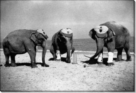 Слоны играют в пляжный крикет