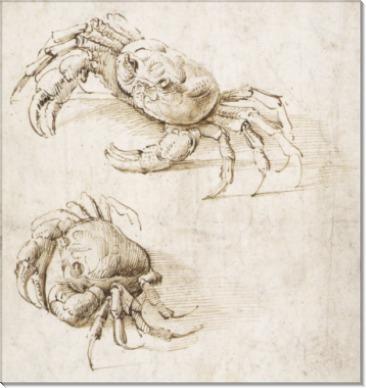 Эскиз двух крабов - Винчи, Леонардо да