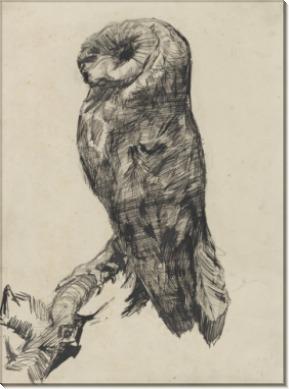 Сипуха при взгляде сбоку (Barn Owl Viewed from the Side), 1887 - Гог, Винсент ван