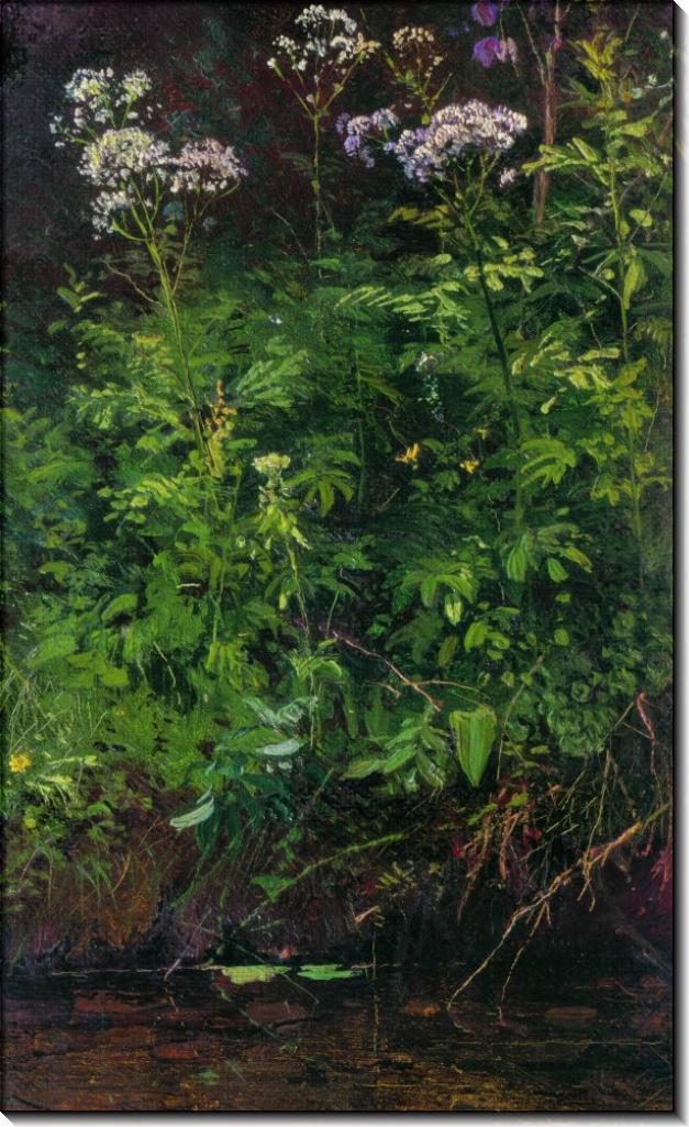 Полевые цветы у воды, 1889-1890 - Шишкин, Иван Иванович