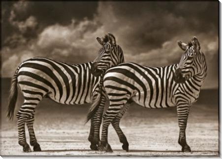 Две зебры, повернувшие головы - Брандт, Ник