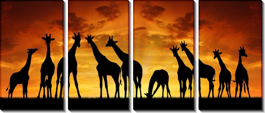 Панорама Жирафы - Сток