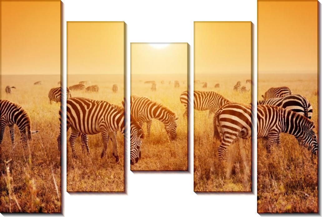 Зебры Африки - Сток