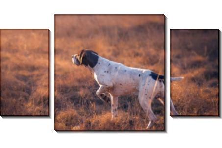 Собака на охоте - Сток
