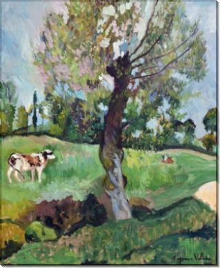 Коровы, пасущиеся на лугу - Валадон, Сюзанна