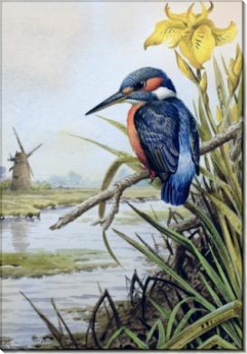 Зимородок на фоне цветка ириса и мельницы - Доннер, Карл (20 век)